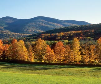 Trees with autumn leaves and mountains in the background