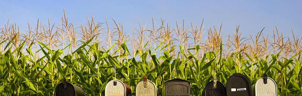 Several mailboxes alongside one another in front of a cornfield