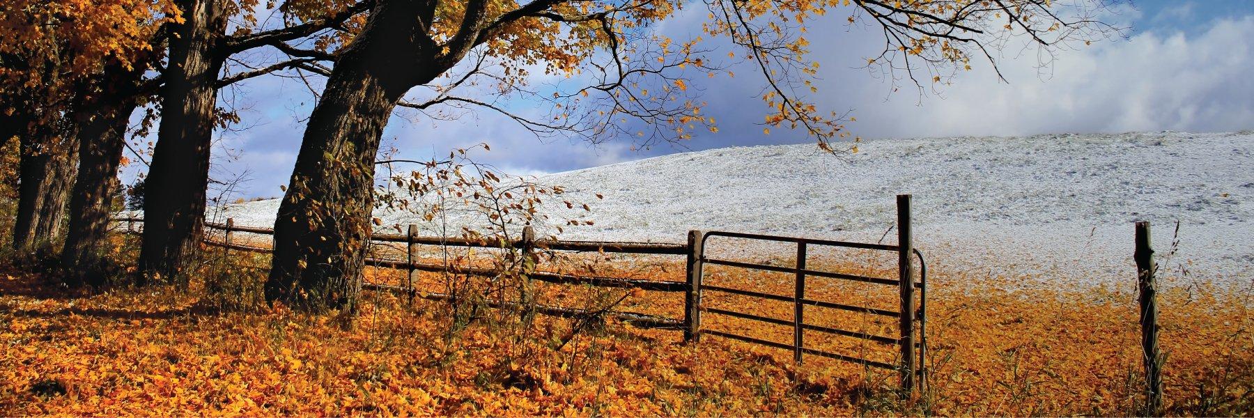 Fall Winter Scene